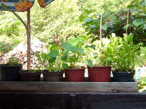 Pflanzen Für Den Balkon by Pflanzen F 252 R Den Balkon 187 Gartenratgeber