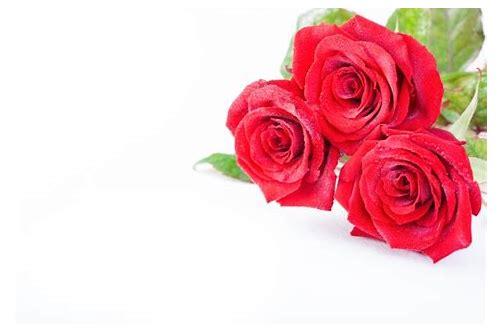 imagens de baixar gratuitos de flores vermelhas