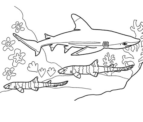 shark coloring pages printable coloring home