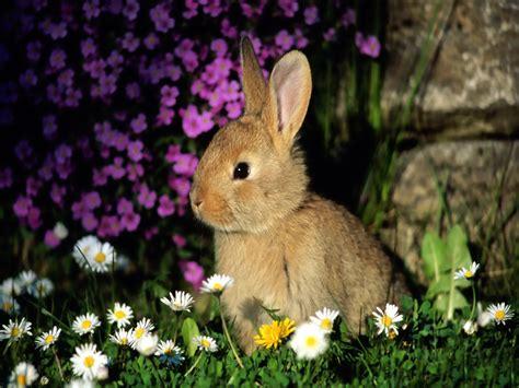 top  beautiful  cute rabbit wallpapers  hd