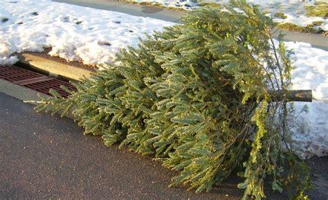 tips     christmas tree