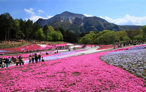 global kitchen knives top 6 flower spots in saitama all about