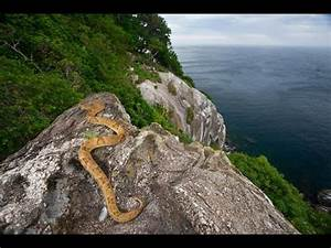 Snake Island in Brazil (2014) - YouTube