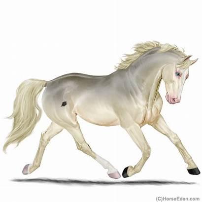 Horse Eden Eventing Horseeden