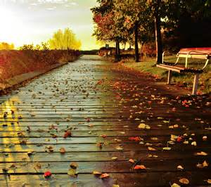 Autumn Path Rainy Bench Nature Hd Wallpaper #1875884