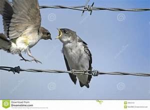 Two Birds On A Wire Stock Photo - Image: 2964470
