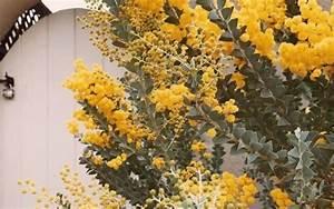 Yellow Plants Aesthetic Indie Art On We Heart It