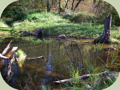 freshwater ecosystems ponds  permaculture