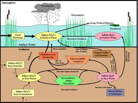 Phosphoru Cycle Diagram Pdf by Water Resources Management And Water Quality Protection