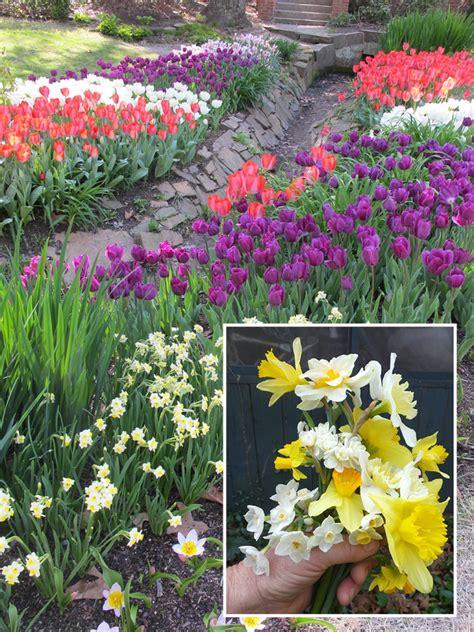 Tips Planting Fall Bulbs by Fall Bulb Planting Tips Hgtv