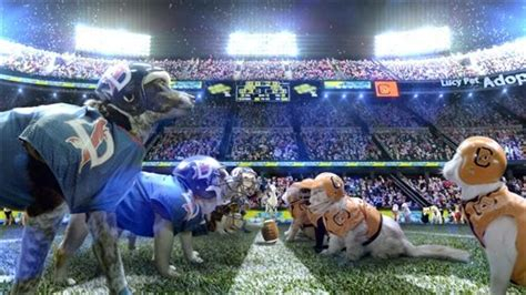 super bowl ad pits cats  dogs     daily