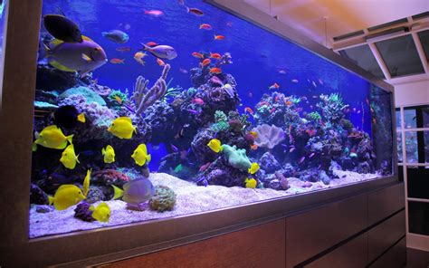 fish tank design  luxury townhouse  london