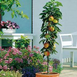 Erdbeeren Pflege Balkon : erdbeeren pflege pflanzen d ngen und schneiden mein ~ Lizthompson.info Haus und Dekorationen