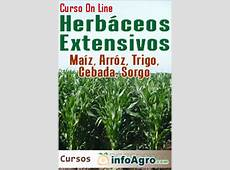 Curso de cultivo herbáceos extensivos Maíz, arroz, trigo