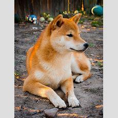 Pa050338  Animals  Hunde, Schöne Hunderassen Und Süße Hunde