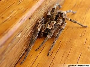 Faire Fuir Les Araignées : loigner les araign es ~ Melissatoandfro.com Idées de Décoration