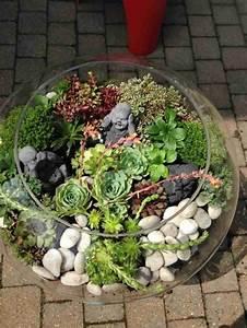 Sukkulenten Für Draußen : sukkulenten im glas im blickfang kreative deko ideen mit pflanzen ~ Watch28wear.com Haus und Dekorationen
