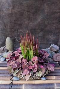 Bambus Braune Blätter : bambus kaufen bambuspflanzen als sichtschutz bambus und pflanzenshop ~ Frokenaadalensverden.com Haus und Dekorationen
