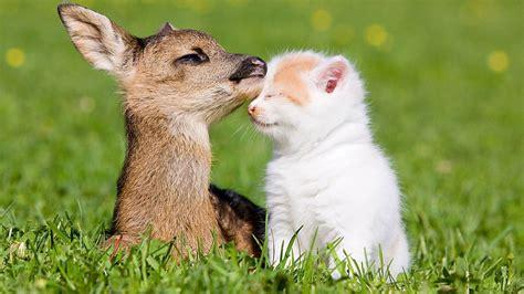 Baby Animals Desktop Wallpaper - baby animals desktop wallpapers wallpapersafari