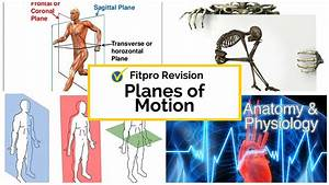 Anatomy And Physiology Study Guide  U2013 Planes Of Motion
