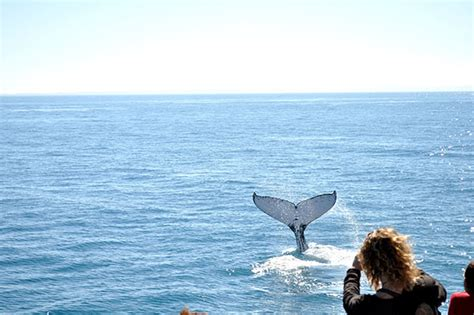25152 Hervey Bay Coupons by Travel Guide Whale In Hervey Bay The Organised