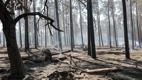 baeume durch extreme trockenheit im klimastress wetterde