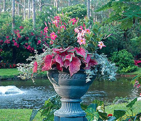 Container Gardening Tips And Ideas Flower And Plant