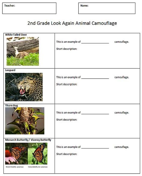 camouflage lesson plans 4th grade animal camouflage comic sjl plymouth tech page