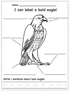 label  bald eagle  zteach teachers pay teachers