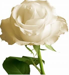 Vase Rond Transparent : fleurs page 20 ~ Teatrodelosmanantiales.com Idées de Décoration