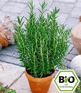 Kräuter Im Topf Kaufen : bio rosmarin 1a pflanzen online kaufen baldur garten ~ Markanthonyermac.com Haus und Dekorationen