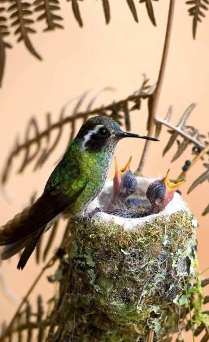 Cute Little Love Birds