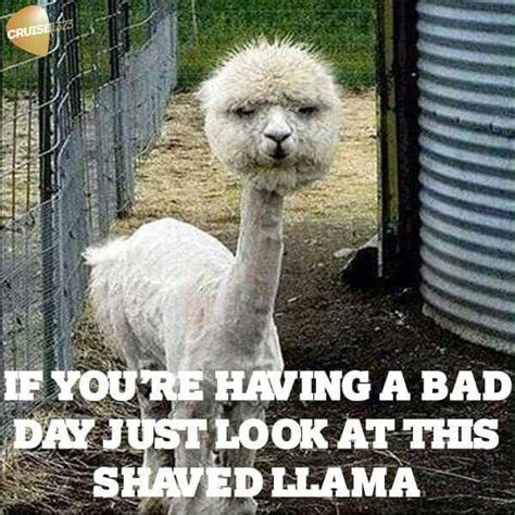 Funny Love You Meme - 40 funny i love you meme sayingimages com