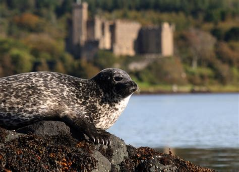Southton Boat Show 2017 Opening Times by Dunvegan Castle Seal Trips Visitscotland