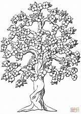 Cherry Blossom Tree Coloring Pages Weeping Getdrawings sketch template