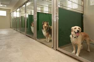 sturdy back panels are the backbone of dog kennel designs With boarding my dog