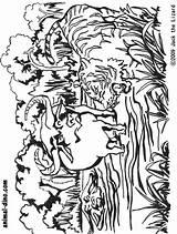 Buffalo Coloring Pages Bills Water Tiger Head Indian Drawing Helmet Printable Getcolorings Animal Bill 891px 71kb Bison Getdrawings Pag Popular sketch template