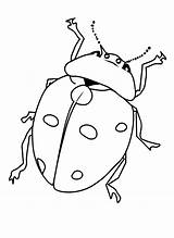 Bug Coloring Pages Printable Bugs Insect Insects Beetle Ladybug Getcoloringpages Printcolorfun Cartoon Drawings Ready Pdf Bestcoloringpagesforkids Results sketch template