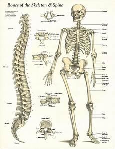 Pin By Jaye On Human Anatomy
