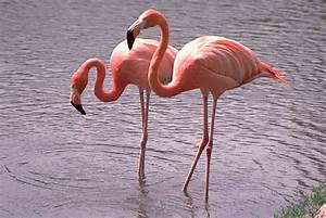 The Wild Life Review: The Flamingo