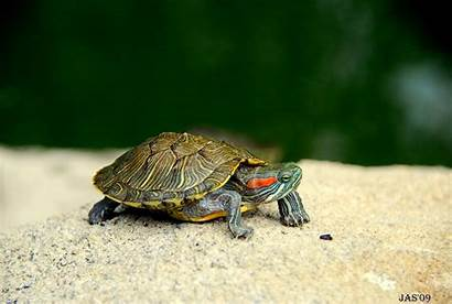 Turtle Backgrounds Wallpapers Wallpapertag