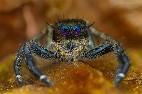 discover  beauty  spiders  microscopic