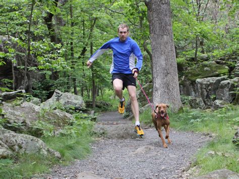 best hiking near me best hiking trails for dogs near me regreen springfield