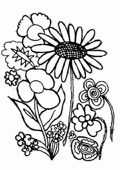 Plants Coloring Flower Type Various Sheet Sky