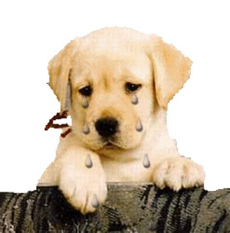 jeux de cuisine pour noel gifs chien triste animes images tristesse du chien