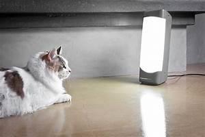 Happy Cat Light : use happy lights for sad feelings wellness at middlebury ~ Watch28wear.com Haus und Dekorationen