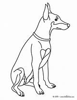 Doberman Coloring Pages Dog Labrador Pinscher Printable Puppy Drawing Colouring Nice Cute Hellokids Looking Designlooter Pets Getcolorings Colour Nintendogs Pichers sketch template