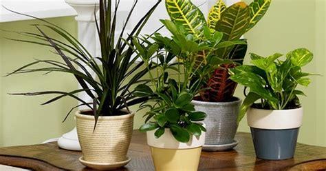 macam macam tanaman hias  ruangan  gambarnya