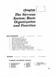 The Nervous System  Basic Organization And Function
