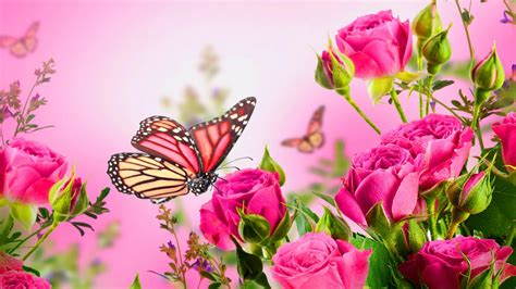 high resolution pictures  rose flowers  butterfly